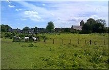 SO8090 : Bobbington Horses by Gordon Griffiths