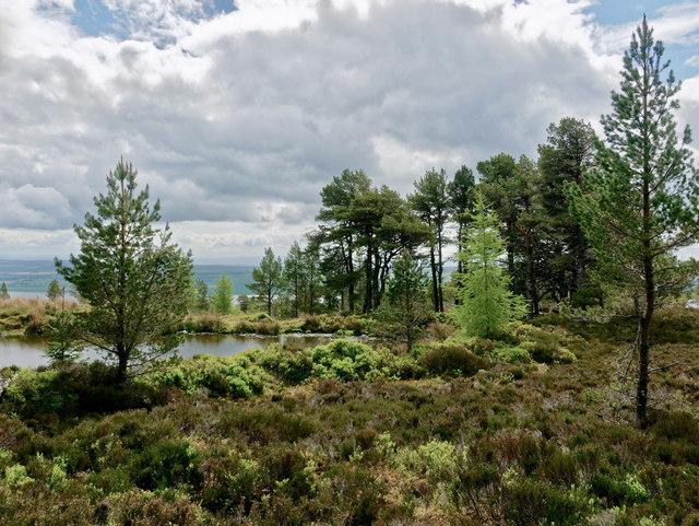 Lochan on the side of Cnoc Fyrish