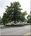 SO1408 : Dominant tree on a Tredegar corner  by Jaggery