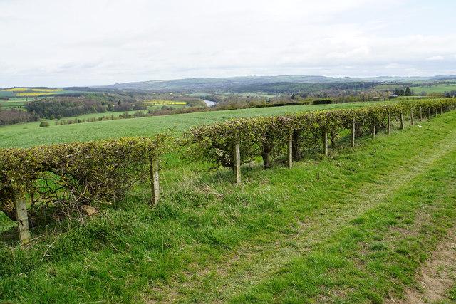 Track near Riding Hills