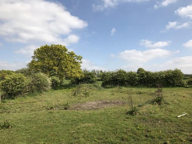Field corner north of Audley
