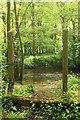 SX7354 : River Avon northwest of Curtisknowle by Derek Harper