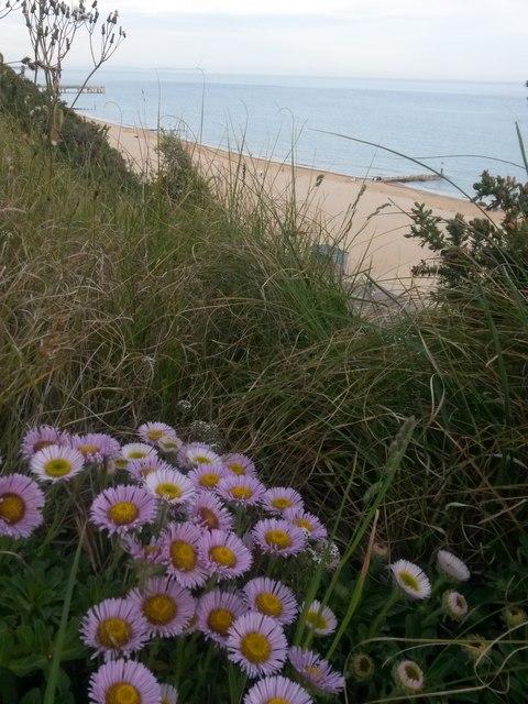 Bournemouth: wild flowers alongside Toft Zig-Zag