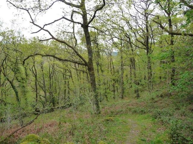 Path down the hillside in Coed Cymerau Isaf