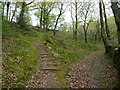 SH6942 : Path junction, Coed Cymerau Isaf by Christine Johnstone