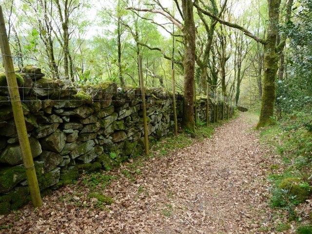 Wall heightened with fencing, Coed Cymerau Isaf