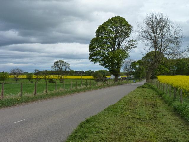 Green trees and yellow rape