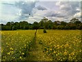 SO8594 : Rape Seed Path by Gordon Griffiths