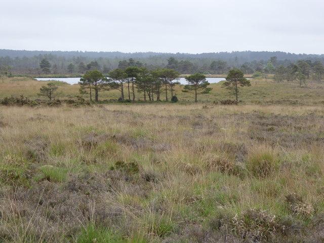 Morden Bog National Nature Reserve