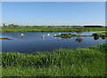 TL6886 : Swans on the Little Ouse by Hugh Venables