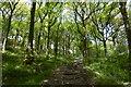 NS3795 : Steps, Ross Wood by Richard Webb