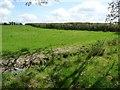 SH8666 : Hedged field boundary, north-west of Tyddyn Uchaf by Christine Johnstone