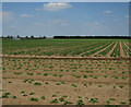 TL7393 : Vegetable field on RAF Methwold site by Hugh Venables