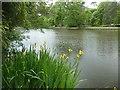 TQ1363 : Irises beside Claremont Lake by Graham Hogg
