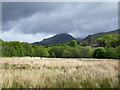 NN0448 : Rushes in Glen Creran by Trevor Littlewood