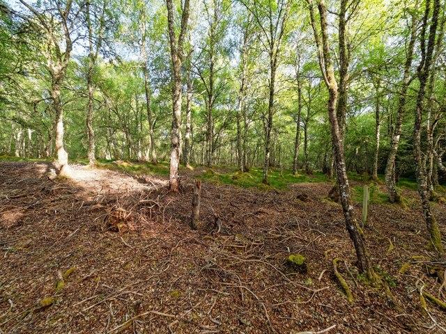 Woodland above the Goose Burn