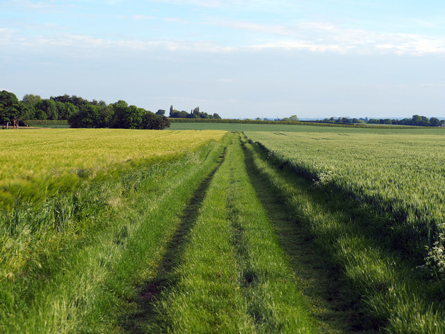 Barley on the left, Wheat on the right