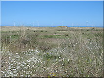 NZ5626 : Dunes southwest of Coatham Sands by Mike Quinn