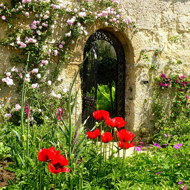 Poppies and Gate