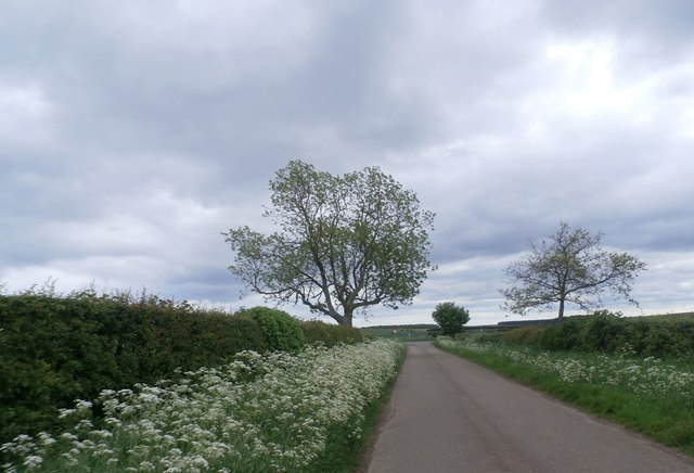 Lane near Glororum