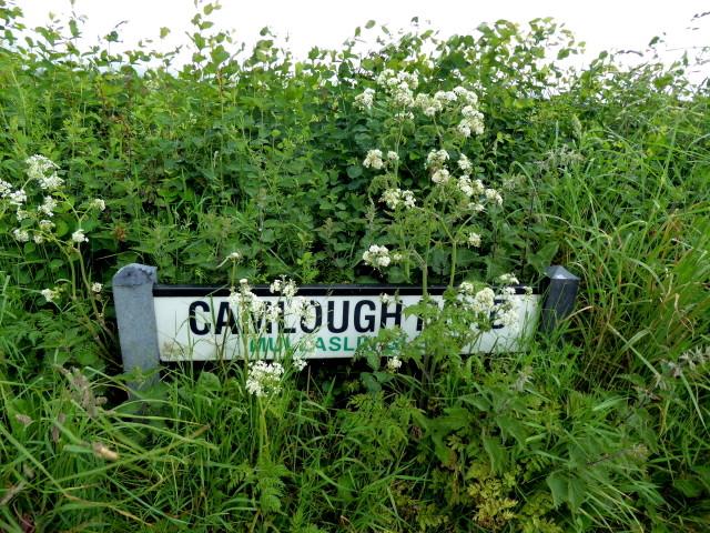 Hidden road sign, Mullaghslin Glebe
