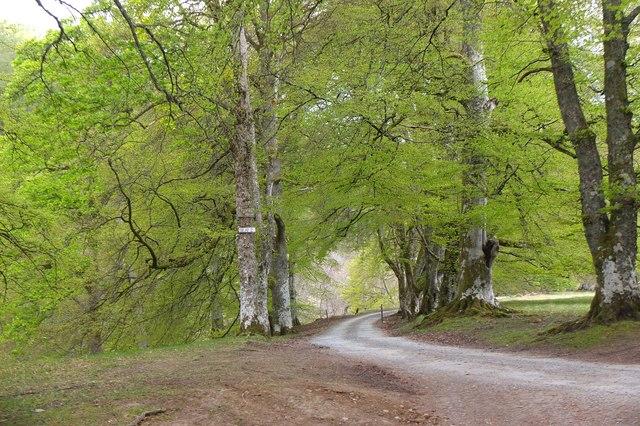 Spring greenery in Glen Tilt