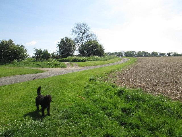 Farm  access  track  from  Warren  Farm  (2)