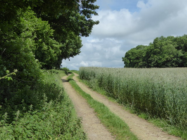 Brick Hill Plantation, Jubilee Trail and Cole Hill Wood