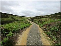 NO1905 : New path past Edge Head, Lomond Hills by Bill Kasman