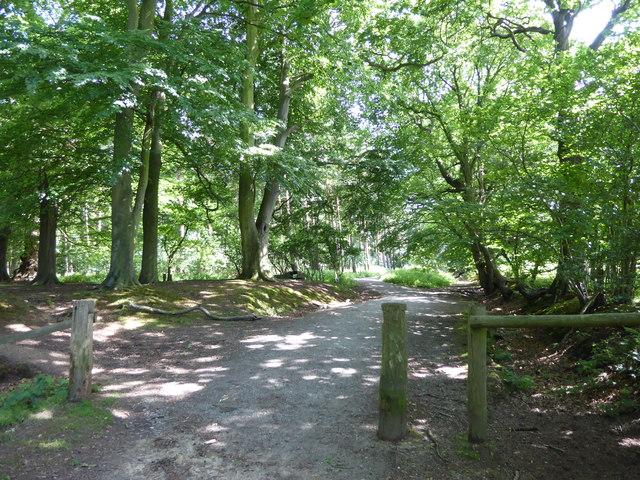 Shepherd's Lane, Weald Country Park