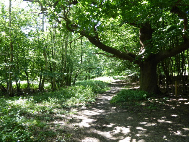 Path in Weald Country Park