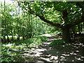 TQ5794 : Path in Weald Country Park by Marathon