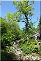 NY3606 : Rydal Beck by DS Pugh