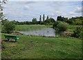 TL4468 : Pond by Broad Lane by Hugh Venables