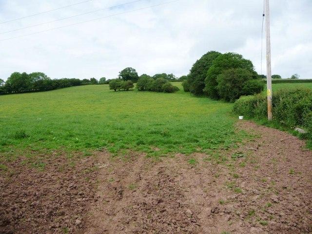 Farmland with trees, off Hunthouse Lane