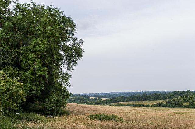 Edge of Holwood Park