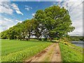 NH5143 : Mature Oaks by valenta