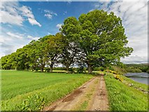 NH5143 : Mature Oaks by valenta