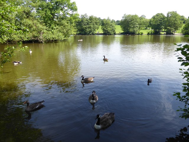 The lake in Weald Country Park