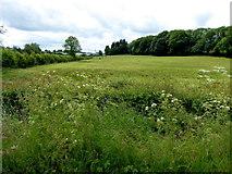 H6155 : Ballynany Townland by Kenneth  Allen