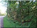 NS1678 : Roadside thicket near Sandbank by M J Richardson