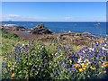 NT6779 : Flower Bed above site of former Open Air Pool, Dunbar by Jennifer Petrie
