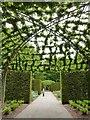 SX7290 : Pergola at the gardens of Castle Drogo by Derek Voller