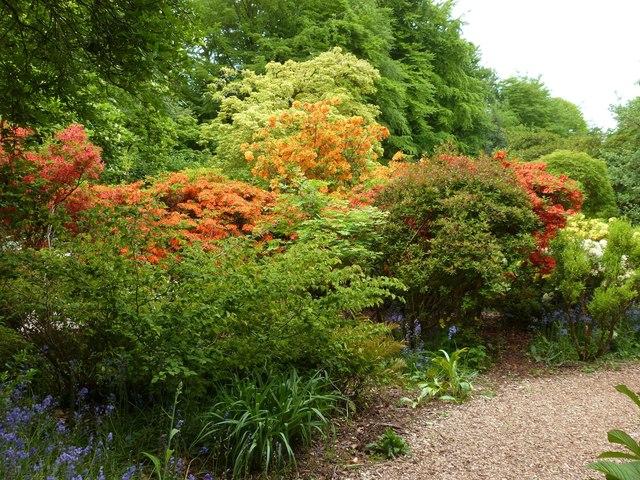 Spring colour in the gardens of Castle Drogo, Devon