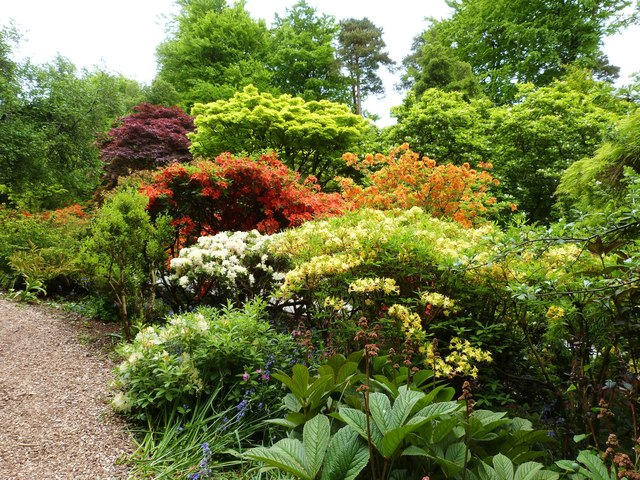 Spring colour in the gardens of Castle Drogo, Devon