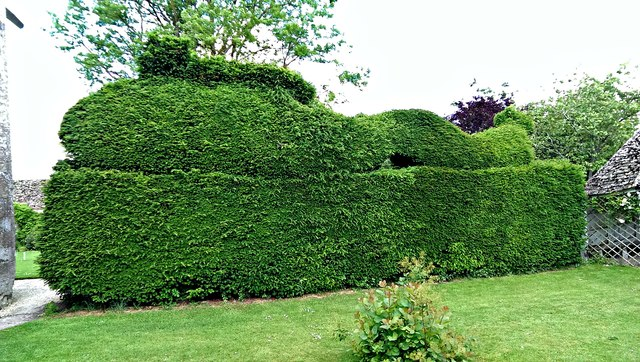 Yew hedge, east lawn, Kelmscott Manor, Oxfordshire
