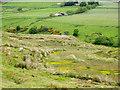 NY9842 : Boggy ground above Stanhope Burn by Trevor Littlewood