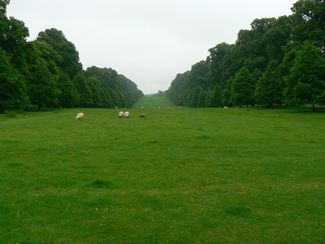 Sheep, grass and trees, Montacute, Somerset