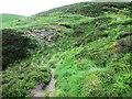 NO2007 : Path crosses Forthear Burn, Lomond Hills by Bill Kasman