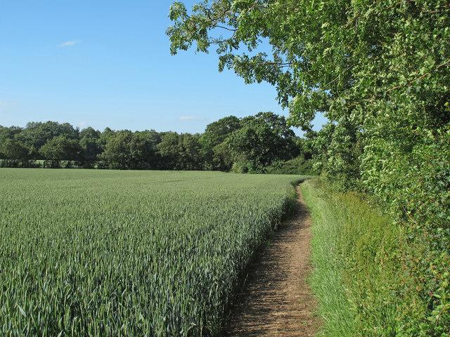 Public footpath on wheat field margin, Edney Common